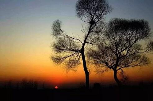 两棵树,你砍哪一棵
